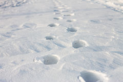 Footprints on white snow at sunset Stock Photography