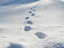 Footprints winter landscape forest in snow frost Stock Photography