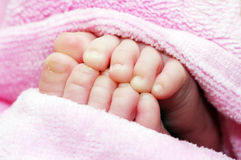 foots małe menchie dwa Zdjęcia Stock
