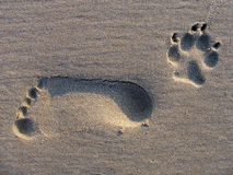 Footstep. Of a man and dog in the sand Stock Images