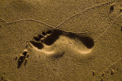 Footstep Royalty Free Stock Photos