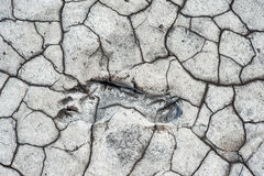 Footstep in dry ground Royalty Free Stock Images