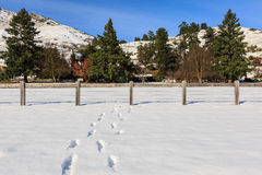 Footstep on fresh snow Stock Images