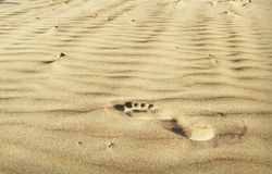 A footstep on the sand Stock Photos