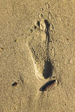 Footstep on the sand Royalty Free Stock Image