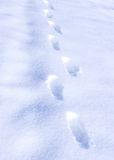 Footstep on snow Stock Image