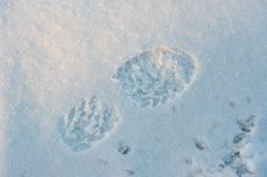 A Footstep In The Snow 2. Blue. Frozen Snow Stock Photo