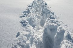Footstep on the snow royalty free stock photos