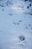Footstep on the snow Stock Photography