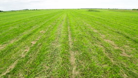 Footstep Walk on the Green Field Royalty Free Stock Images