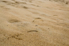 Footstep on the wet sand Stock Photos