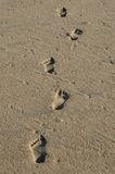 Footsteps. Several footsteps on the sand of a beach Royalty Free Stock Images