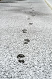 Footsteps Stock Images
