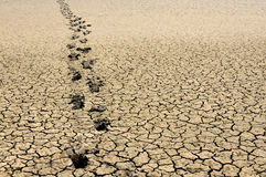 Footsteps in arid land Royalty Free Stock Images