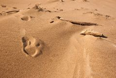 Footsteps on the Beach Stock Photography