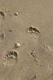 Footsteps on the beach. Kids footsteps left on the sand after running on the beach stock image
