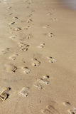 Footsteps on the beach. A picture of many footsteps on a beach in israel Stock Image