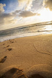 Footsteps in beach sand. Series of footsteps leading into the surf on a beach in hawaii Stock Image