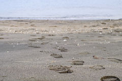 Footsteps on the beach. Footsteps on the sandy beach Stock Photography