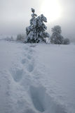 Footsteps through a blizzard. Footsteps through the snow towards the sun Royalty Free Stock Photography