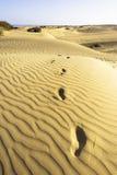 Footsteps in desert Stock Images