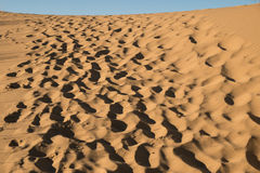 Footsteps through the desert Stock Photography