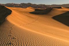 Footsteps in the desert stock photography