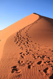Footsteps on dune Stock Image