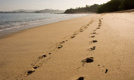 Footsteps on Early Morning Beach Stock Photography