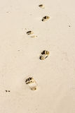 Footsteps and Golden Sand Stock Photos