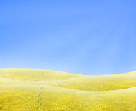 Footsteps into the horizon. Simple tranquil beautiful horizon with a surreal yellow grass and footsteps walking into nothing Stock Photos