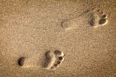 Free Footsteps In Sandy Royalty Free Stock Photos - 31917308