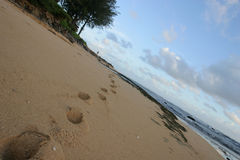 Footsteps in Kauai. Footsteps leading to the Pacific ocean, on the island of Kauai, Hawaii stock photography