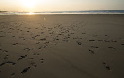 Footsteps. Landscape of a beach with a footsteps in the sand. The sun going down on it right here Stock Photography