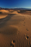 Footsteps on Mesquite Sand Dunes, Death Valley National Park Royalty Free Stock Images