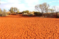 Footsteps in the red centre of Austalian desert Royalty Free Stock Image