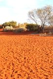 Footprints in the red centre of Austalian desert Stock Photo