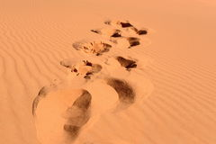 Footsteps in Sahara Stock Images