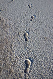 Footsteps on the salt Royalty Free Stock Images