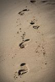 Footsteps in the sand. A view of a footsteps in the sand Royalty Free Stock Photos