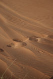 Footsteps in the Sand. Footsteps in the rippled sand Stock Photography