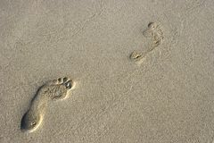 Footsteps on the sand. Fun footsteps on the coral sandy beach stock images