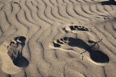 Footsteps in a sand Royalty Free Stock Photography