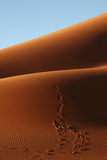 Footsteps in the sand. In namib-naukluft national park, namibia Royalty Free Stock Photos