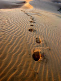 Footsteps in the Sand. Footsteps in the dunes, vietnam Royalty Free Stock Photos