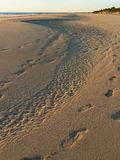 Footsteps in the Sand Stock Image