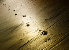 Footsteps in sand Royalty Free Stock Photography