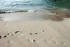 Footsteps in the sand Royalty Free Stock Photos