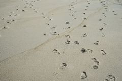 Footsteps in the sand on a beach. On Penang island, Malaysia Stock Photos
