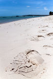 Footsteps in sand Stock Image